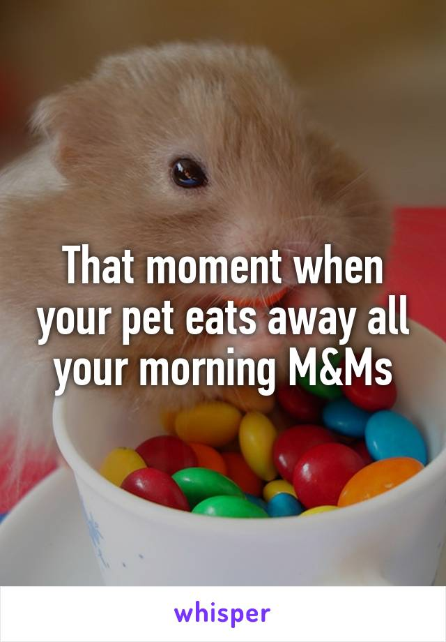 That moment when your pet eats away all your morning M&Ms