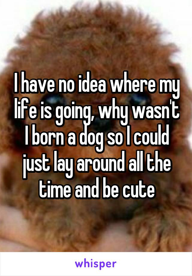 I have no idea where my life is going, why wasn't I born a dog so I could just lay around all the time and be cute