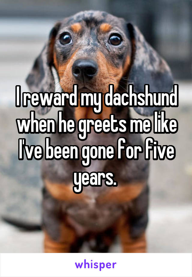 I reward my dachshund when he greets me like I've been gone for five years.