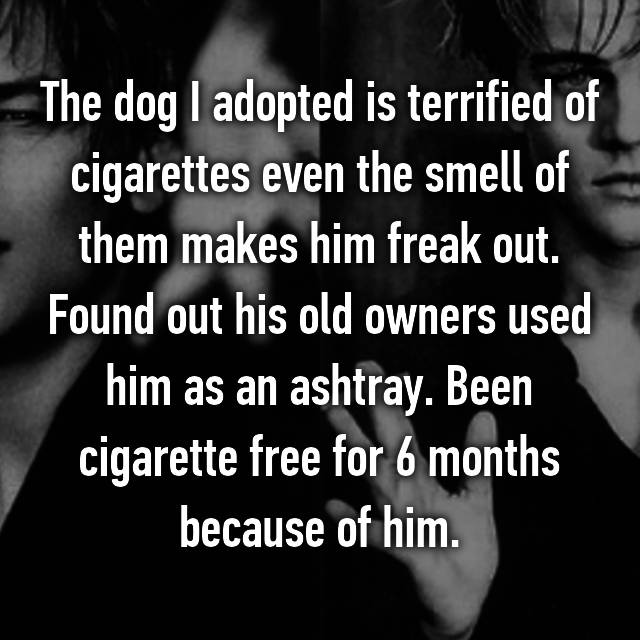 The dog I adopted is terrified of cigarettes even the smell of them makes him freak out. Found out his old owners used him as an ashtray. Been cigarette free for 6 months because of him. 😊