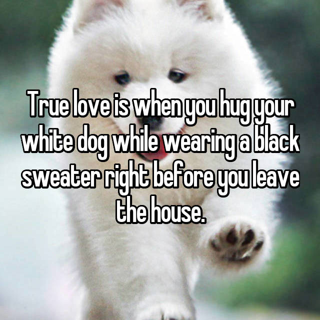 True love is when you hug your white dog while wearing a black sweater right before you leave the house.