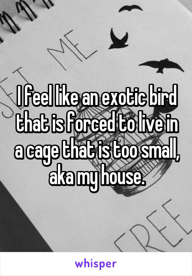 I feel like an exotic bird that is forced to live in a cage that is too small, aka my house.
