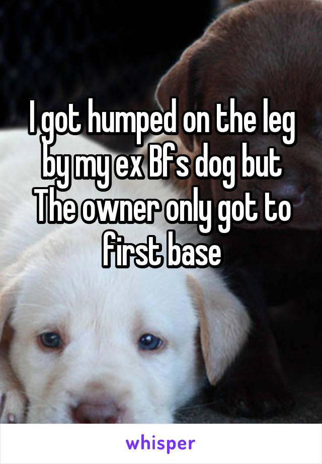I got humped on the leg by my ex Bfs dog but The owner only got to first base