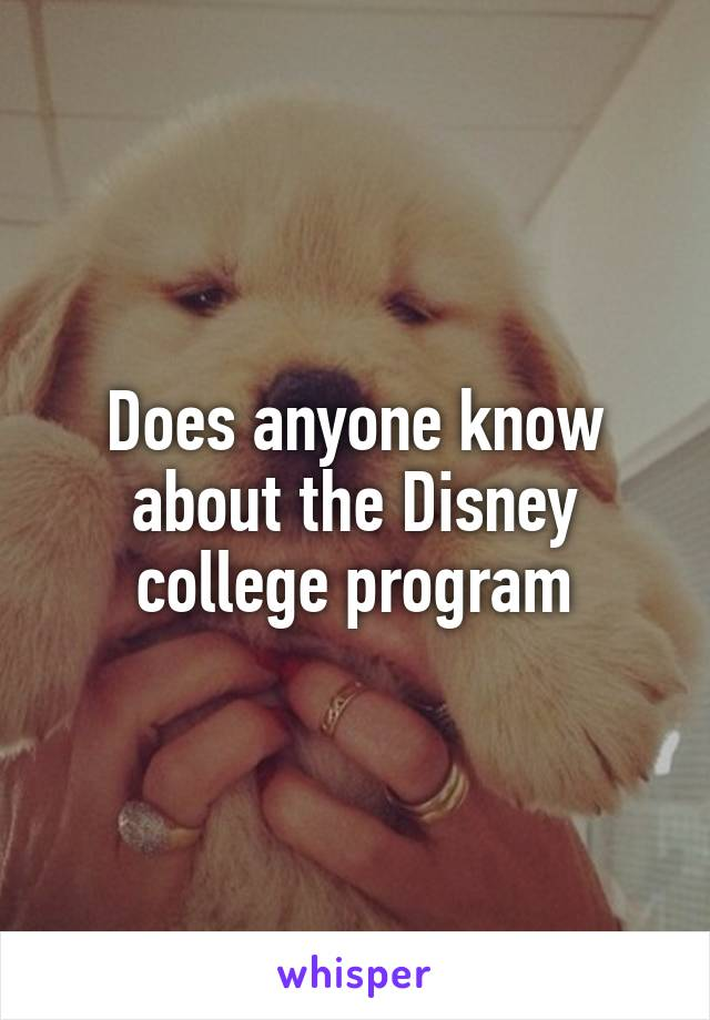 Does anyone know about the Disney college program