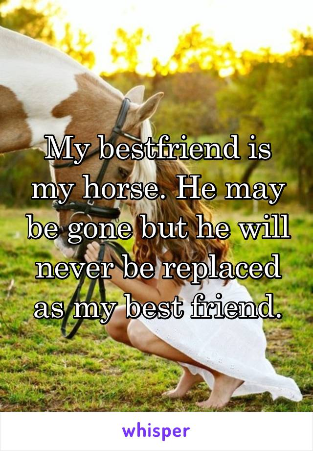 My bestfriend is my horse. He may be gone but he will never be replaced as my best friend.