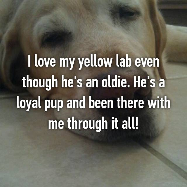 I love my yellow lab even though he's an oldie. He's a loyal pup and been there with me through it all!