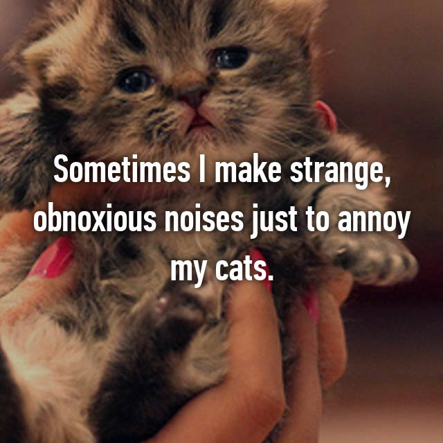 Sometimes I make strange, obnoxious noises just to annoy my cats.