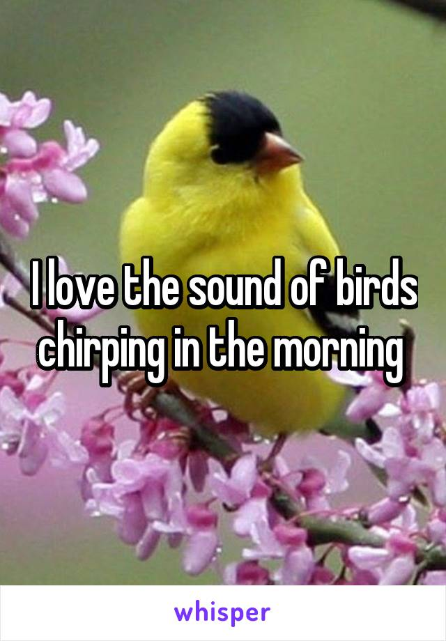 I love the sound of birds chirping in the morning