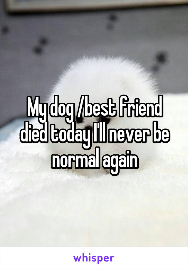My dog /best friend died today I'll never be normal again