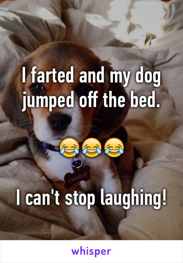 I farted and my dog jumped off the bed.  😂😂😂  I can't stop laughing!