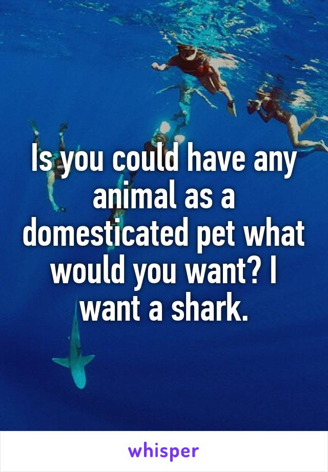 Is you could have any animal as a domesticated pet what would you want? I want a shark.