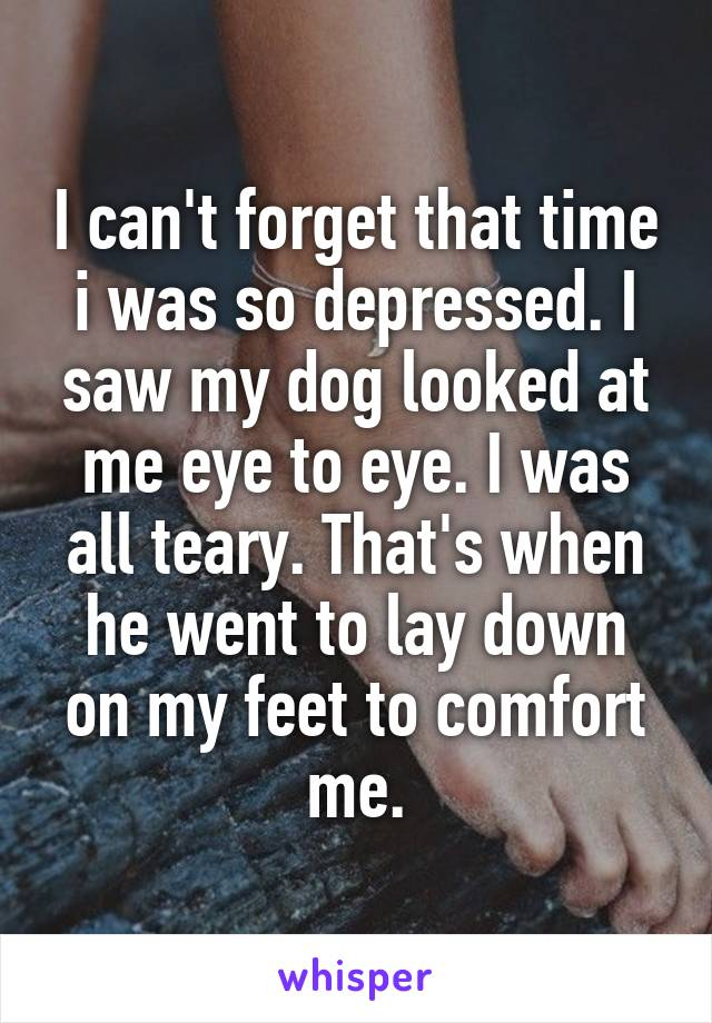 I can't forget that time i was so depressed. I saw my dog looked at me eye to eye. I was all teary. That's when he went to lay down on my feet to comfort me.