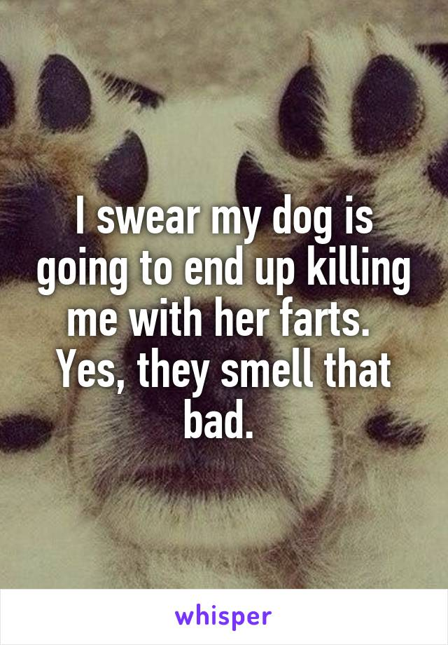 I swear my dog is going to end up killing me with her farts.  Yes, they smell that bad.