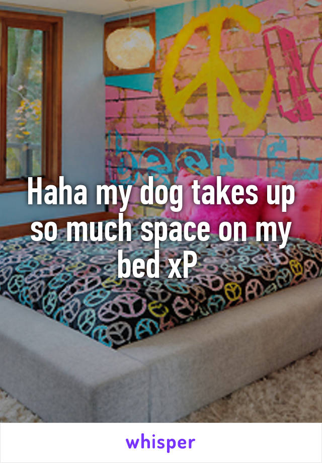 Haha my dog takes up so much space on my bed xP