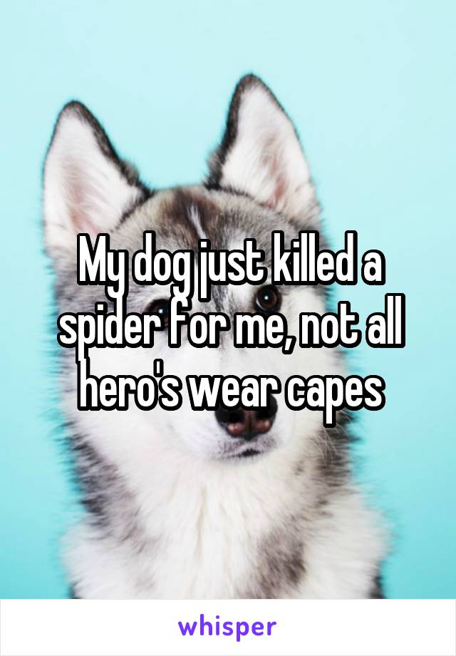 My dog just killed a spider for me, not all hero's wear capes