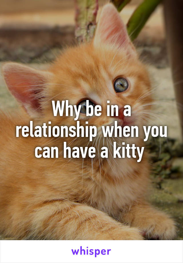 Why be in a relationship when you can have a kitty