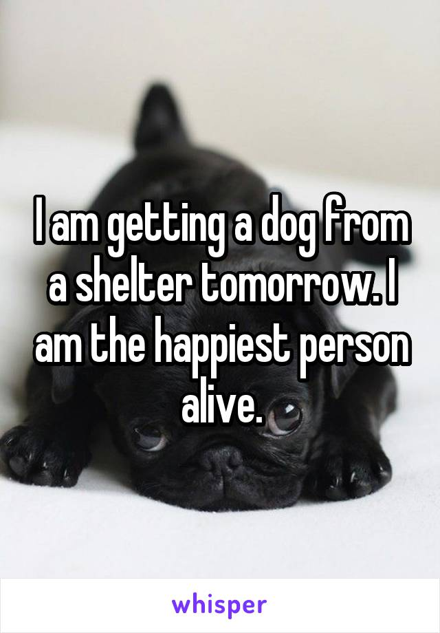 I am getting a dog from a shelter tomorrow. I am the happiest person alive.