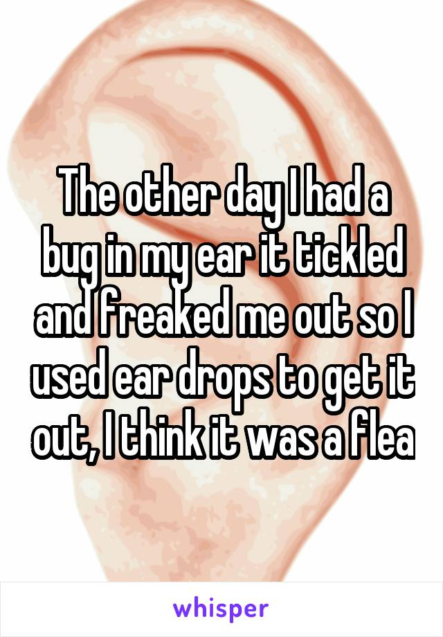 The other day I had a bug in my ear it tickled and freaked me out so I used ear drops to get it out, I think it was a flea