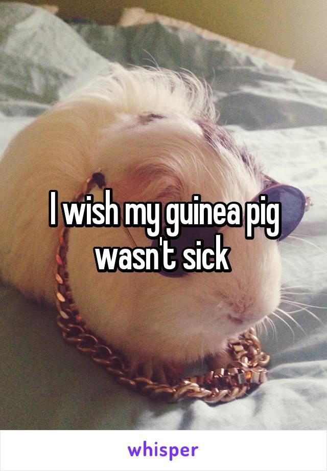 I wish my guinea pig wasn't sick