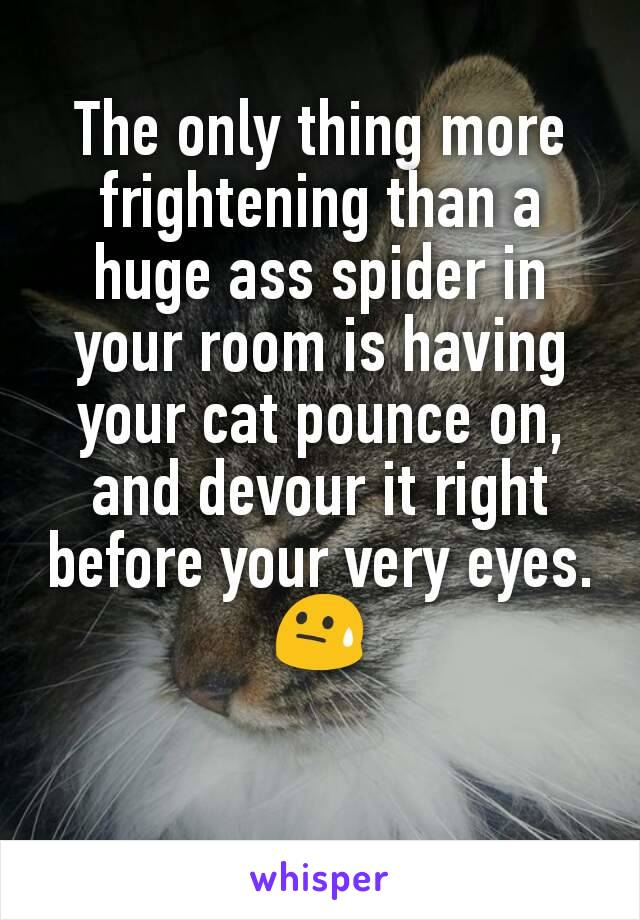 The only thing more frightening than a huge ass spider in your room is having your cat pounce on, and devour it right before your very eyes. 😓