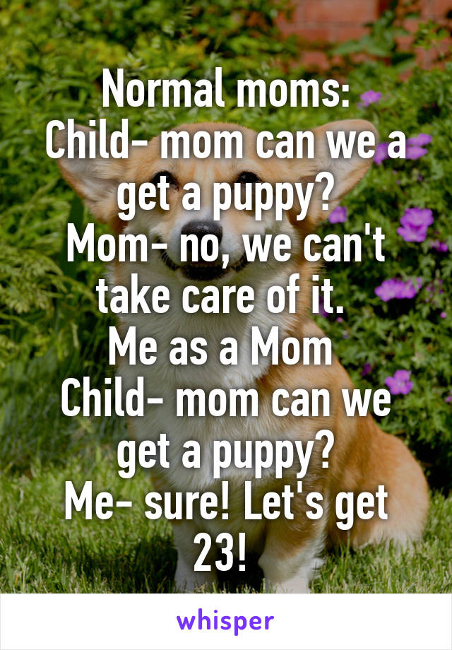 Normal moms: Child- mom can we a get a puppy? Mom- no, we can't take care of it.  Me as a Mom  Child- mom can we get a puppy? Me- sure! Let's get 23!