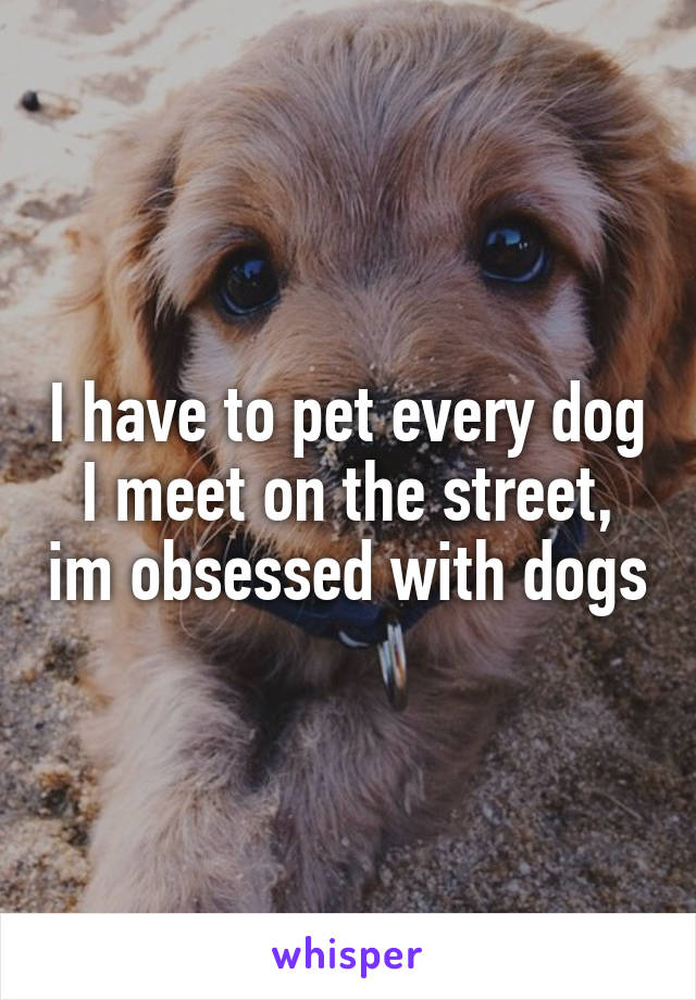 I have to pet every dog I meet on the street, im obsessed with dogs
