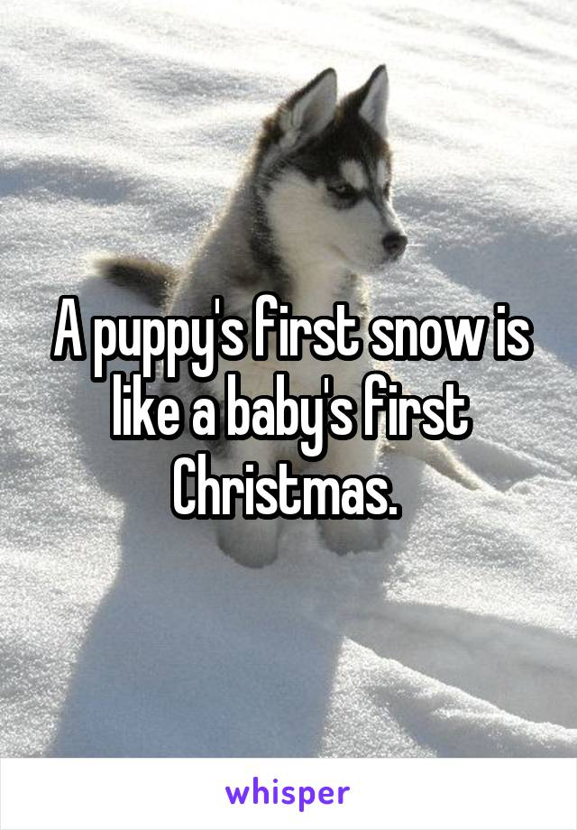 A puppy's first snow is like a baby's first Christmas.