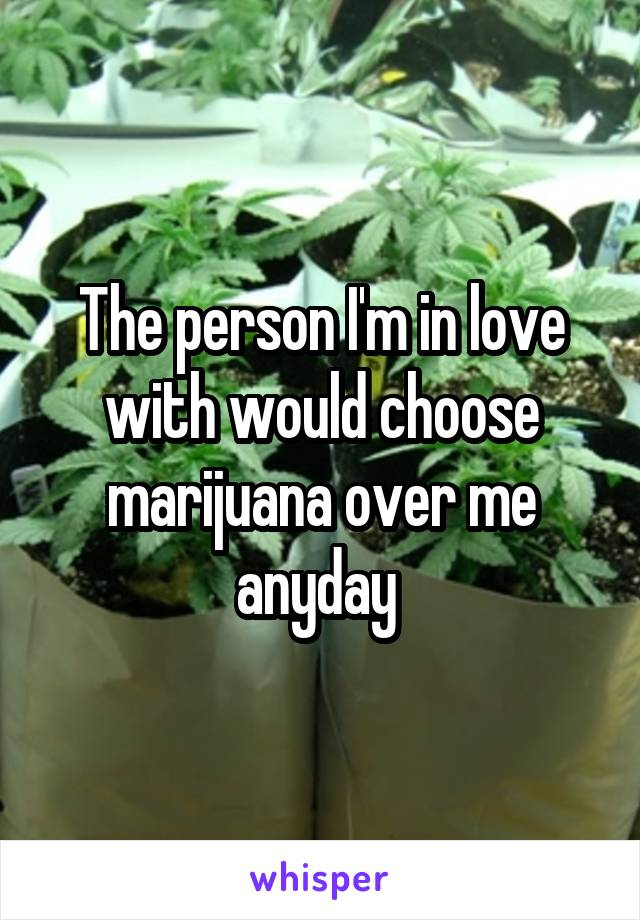 The person I'm in love with would choose marijuana over me anyday