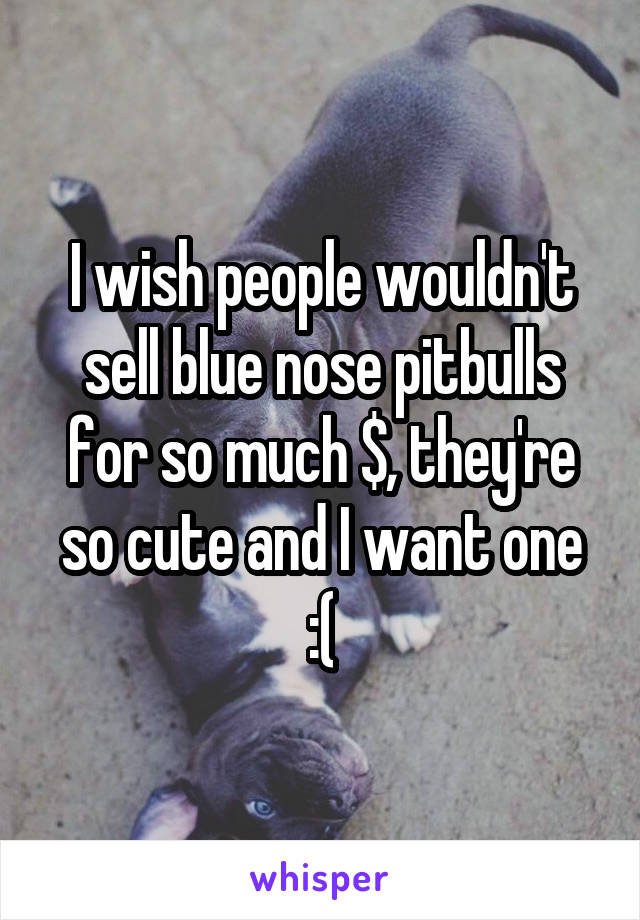 I wish people wouldn't sell blue nose pitbulls for so much $, they're so cute and I want one :(
