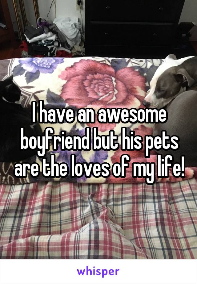 I have an awesome boyfriend but his pets are the loves of my life!