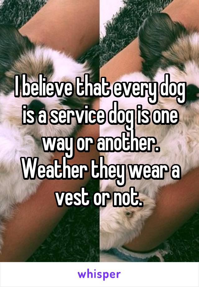 I believe that every dog is a service dog is one way or another. Weather they wear a vest or not.