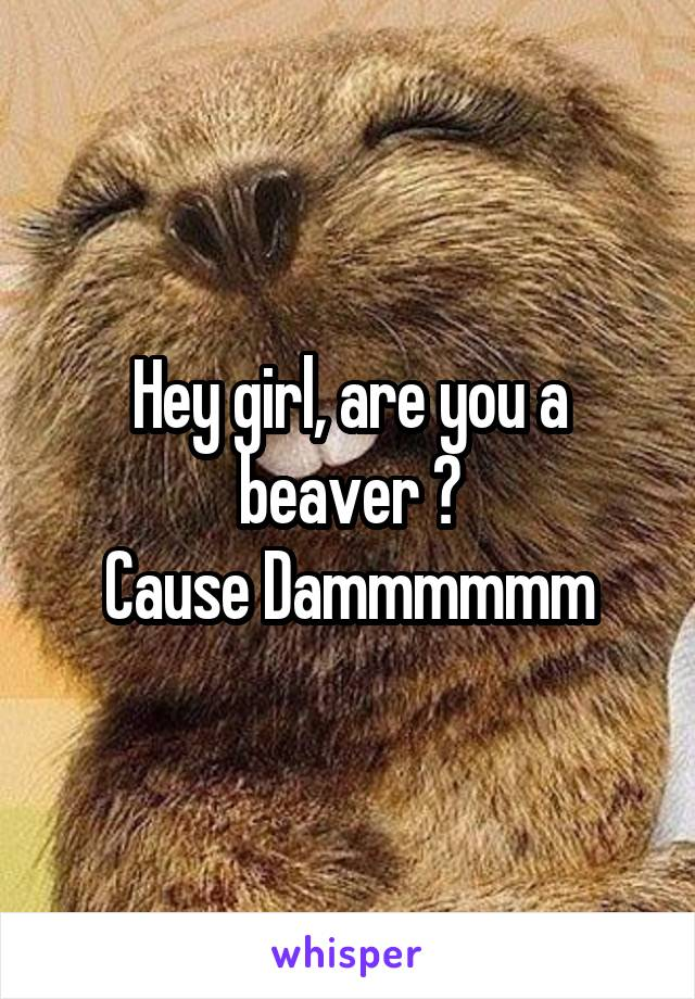 Hey girl, are you a beaver ? Cause Dammmmmm