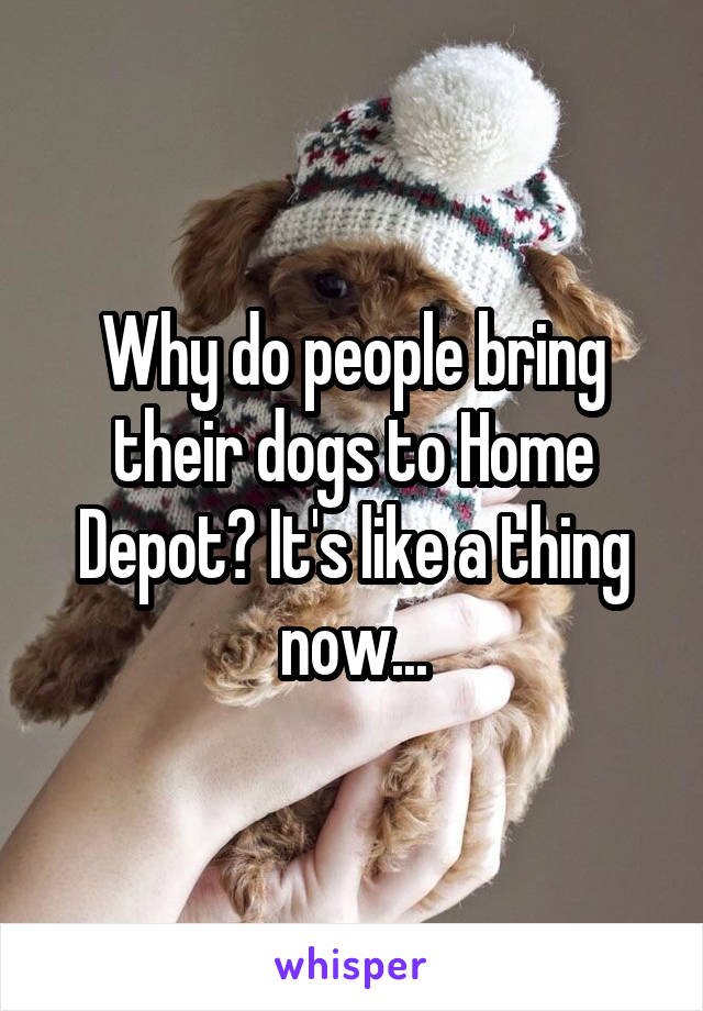 Why do people bring their dogs to Home Depot? It's like a thing now...