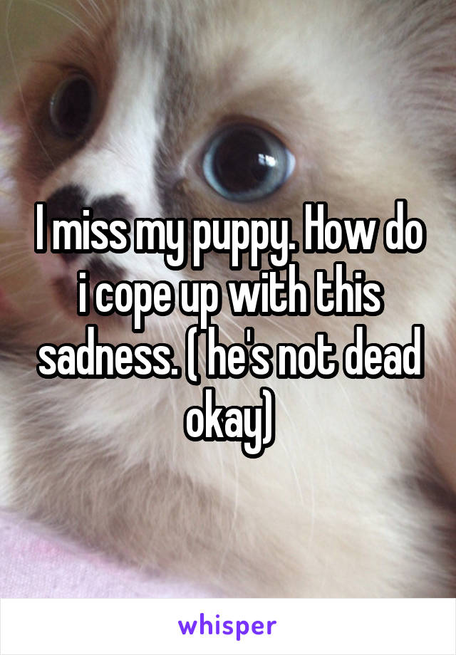 I miss my puppy. How do i cope up with this sadness. ( he's not dead okay)