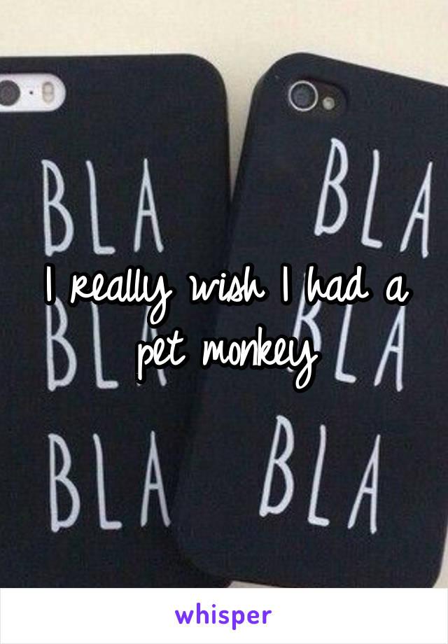 I really wish I had a pet monkey