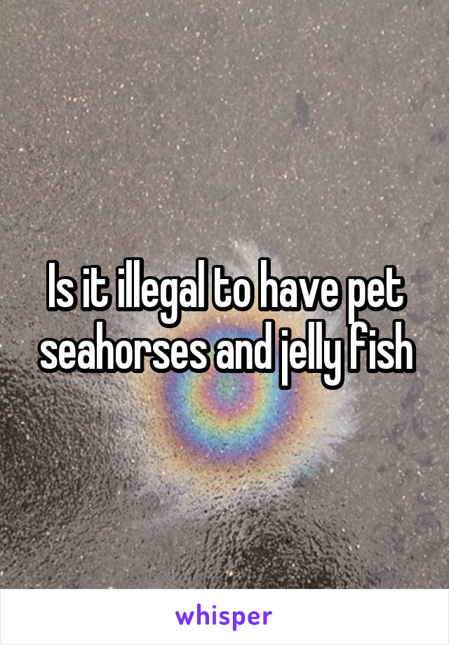 Is it illegal to have pet seahorses and jelly fish