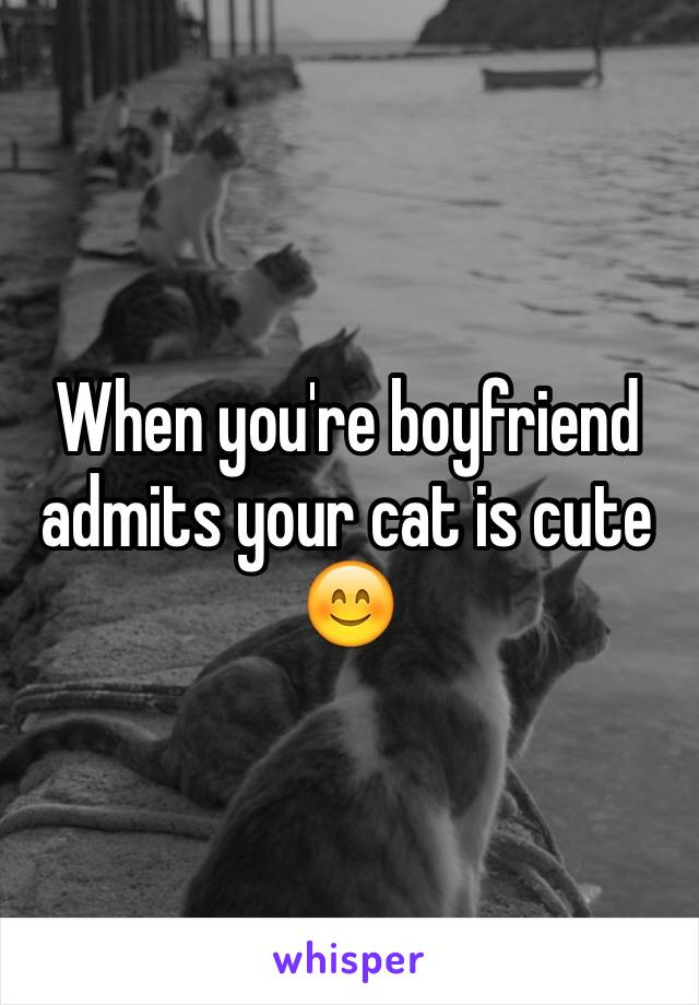 When you're boyfriend admits your cat is cute 😊