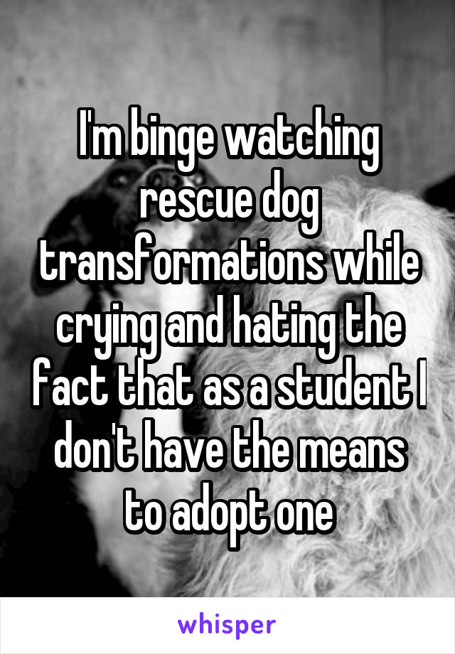 I'm binge watching rescue dog transformations while crying and hating the fact that as a student I don't have the means to adopt one