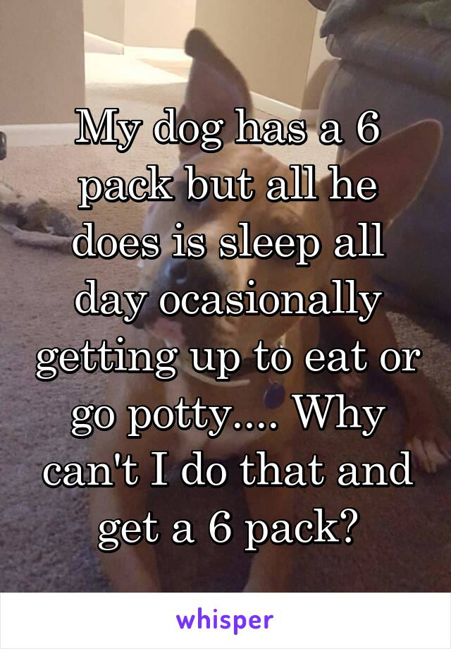 My dog has a 6 pack but all he does is sleep all day ocasionally getting up to eat or go potty.... Why can't I do that and get a 6 pack?