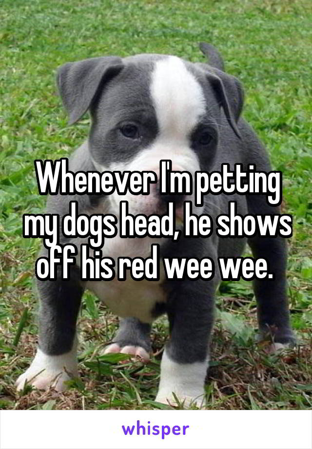 Whenever I'm petting my dogs head, he shows off his red wee wee.