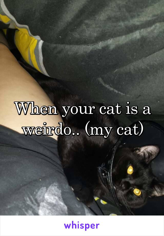 When your cat is a weirdo.. (my cat)