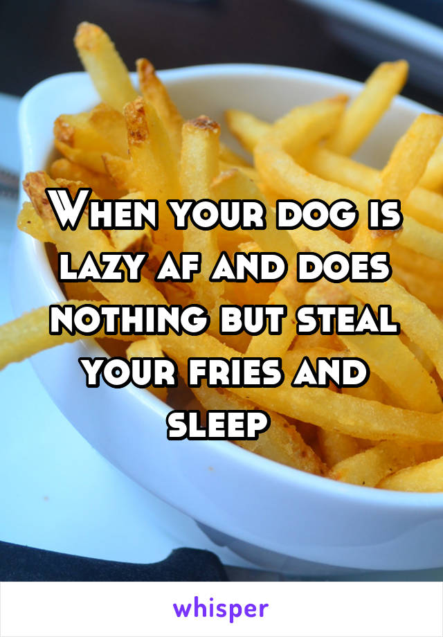 When your dog is lazy af and does nothing but steal your fries and sleep