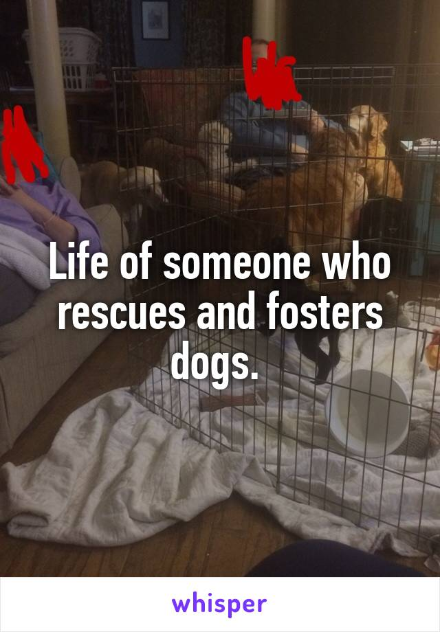 Life of someone who rescues and fosters dogs.
