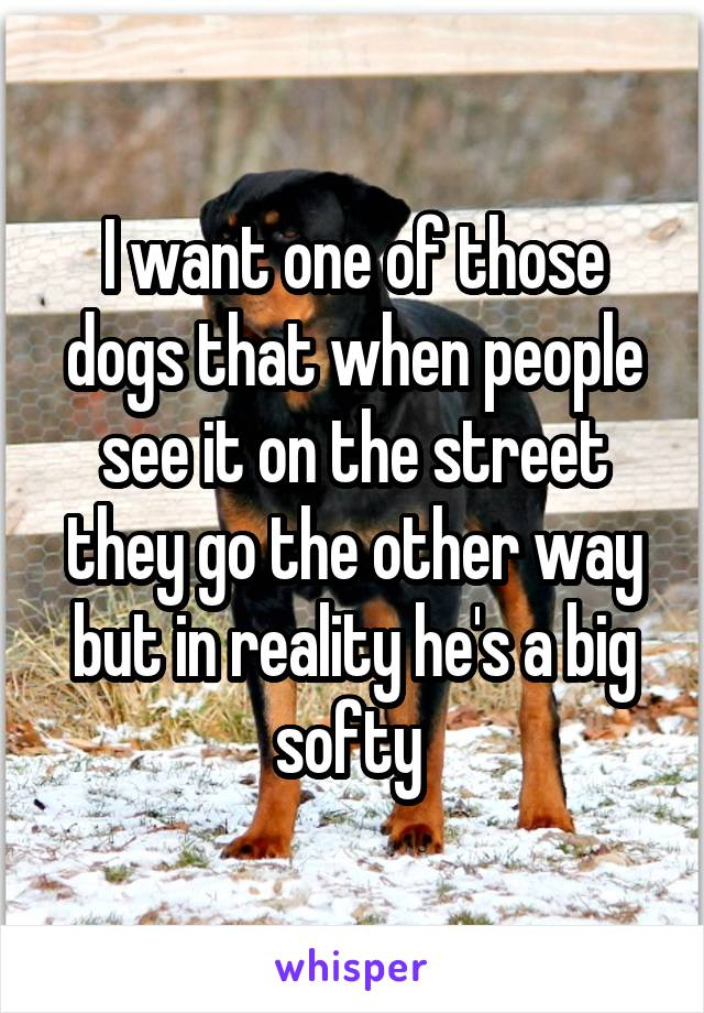 I want one of those dogs that when people see it on the street they go the other way but in reality he's a big softy