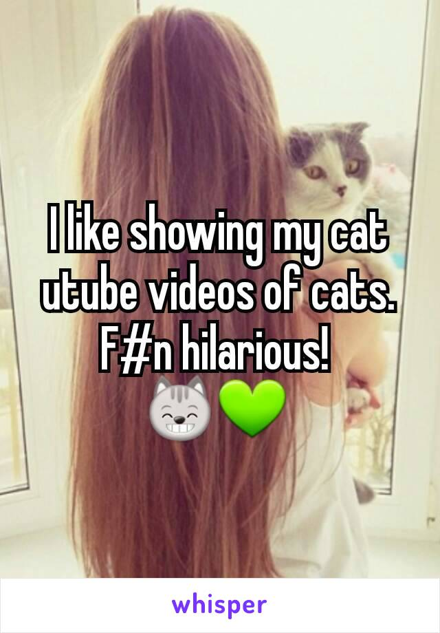 I like showing my cat utube videos of cats. F#n hilarious!  😸💚