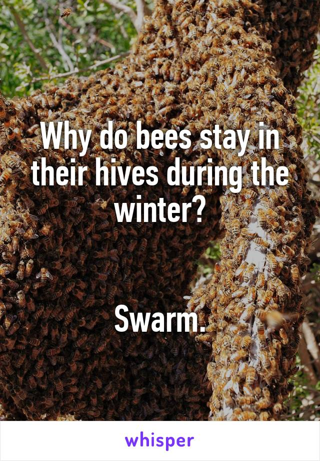 Why do bees stay in their hives during the winter?   Swarm.
