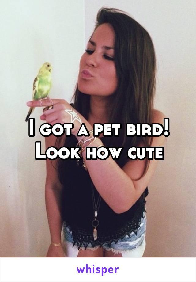 I got a pet bird! Look how cute