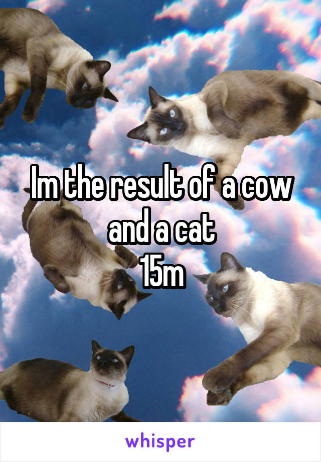 Im the result of a cow and a cat 15m