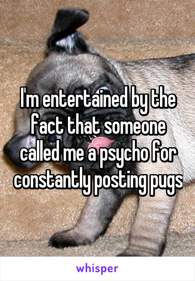 I'm entertained by the fact that someone called me a psycho for constantly posting pugs