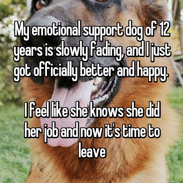 My emotional support dog of 12 years is slowly fading, and I just got officially better and happy.   I feel like she knows she did her job and now it's time to leave